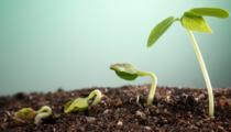 grow.fw.png