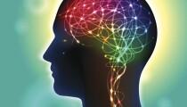 072616_brain