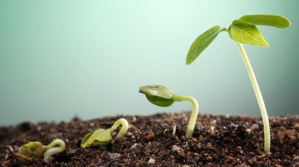 managingandgrowing.fw.png