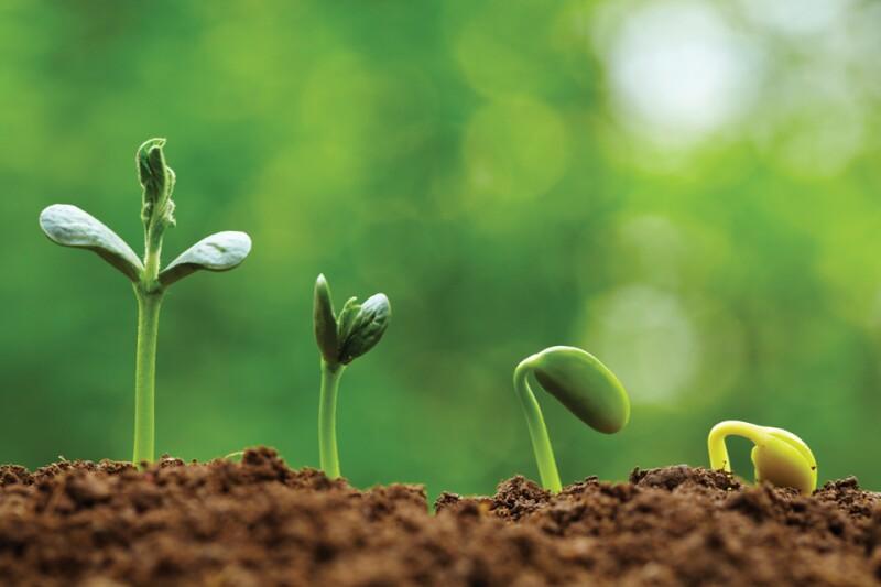 Grow Your Organization, Grow Your Talent