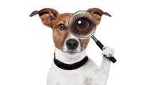 Microlearning Dog